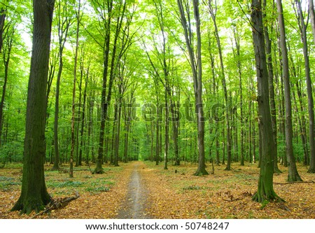 Path in  forest #50748247