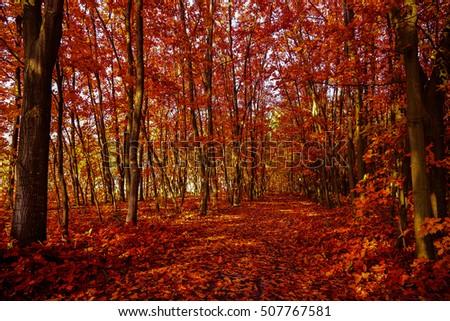 autumn park #507767581