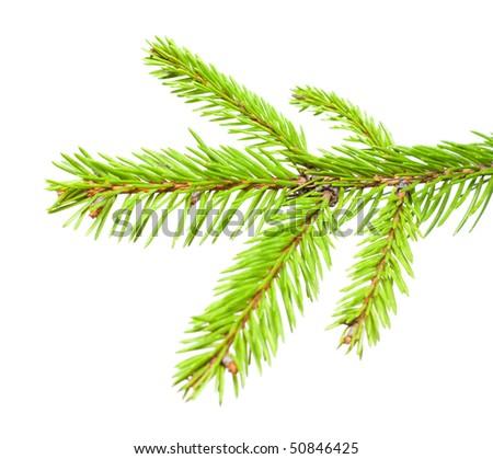 x-mas tree branch #50846425