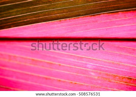 Abstract patterns of pink leaf. #508576531
