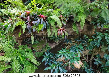 wet green moss and fern on tree and log jungle in deep rain forest , adventure walkway in deep wild in Chiang Mai, Thailand