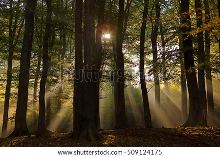 forest with sunlight in autumn #509124175