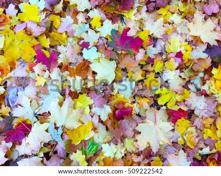 Colorful autumn leaves #509222542