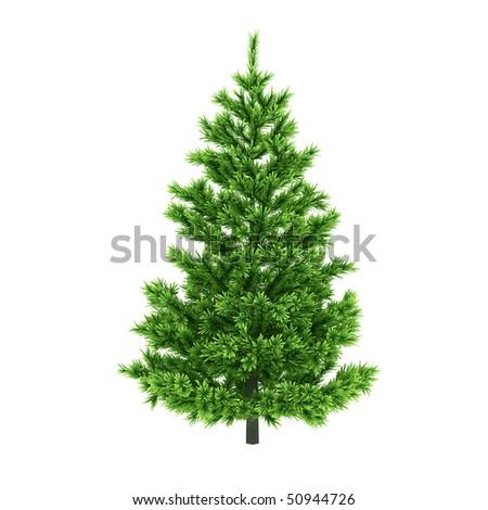 Pine tree isolated on white background #50944726