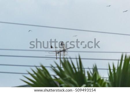 A bird on the electric pole #509493154