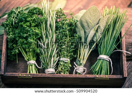 close view on fresh herbs bunch Royalty-Free Stock Photo #509904520