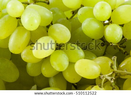 Green fresh ripe grapes close up. Nature background #510112522