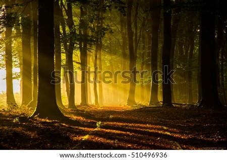 Morning Gold #510496936