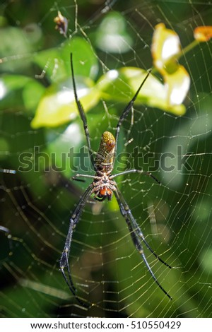 Spider on web #510550429