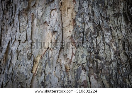 Bark wood texture,life of nature background #510602224