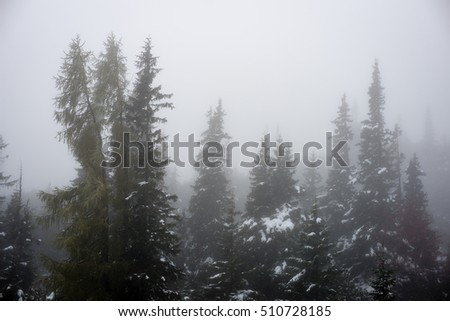 cold day in the snowy winter forest with fog and frost #510728185
