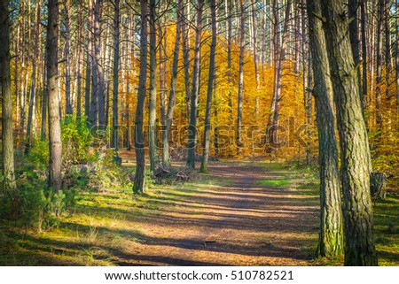 Forest Autumn Season #510782521