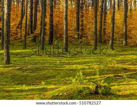 Forest Autumn Season #510782527