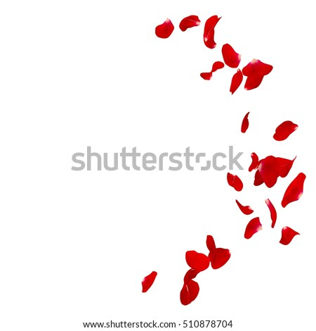 Red rose petals scattered on the floor in a semi-circle. There is a place for Your text or photo Royalty-Free Stock Photo #510878704