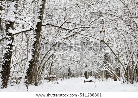 Trees with snow in winter park #511288801