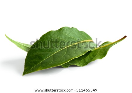 Two bay leaves isolated on white. Royalty-Free Stock Photo #511465549