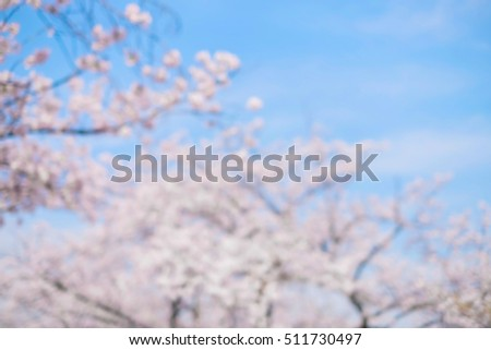 defocus bokeh of cherry blossom , great for your design #511730497