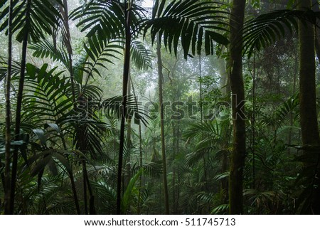 Tropical Rainforest Landscape,Tropical forest,Forest Royalty-Free Stock Photo #511745713