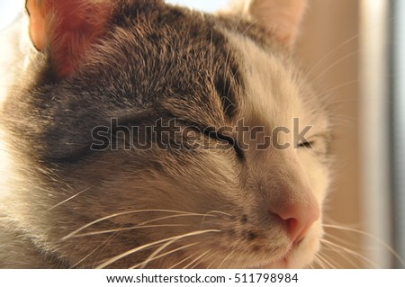 Portrait of a cat. Wild eyes and long whiskers. #511798984