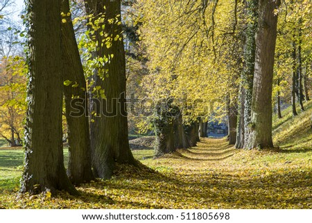 alley of trees in autumn  #511805698