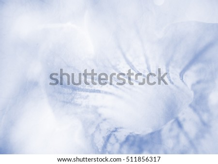 Soft flower background texture, unfocused #511856317
