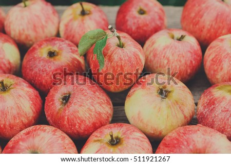 Sweet fresh ripe red apples heap scattered on gray weathered wood closeup, fruit background. Healthy food on table. Fall harvest, farming agricultural concept #511921267