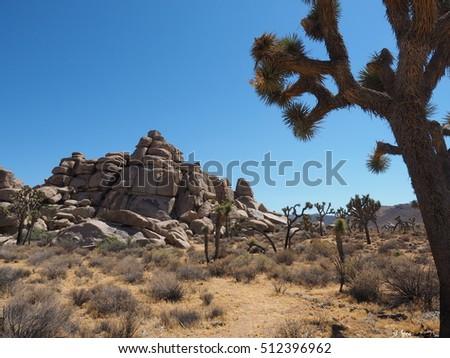 Signature of Joshua Tree National Park: Joshua Trees and odd form of rocks #512396962