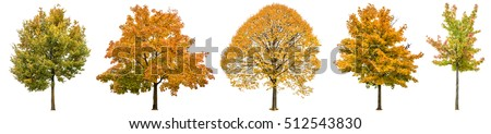 Autumn trees isolated on white background. Oak, maple, linden. Yellow red green leaves #512543830