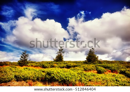 Landscape tree and field of green fresh grass under blue sky. Dramatic scene. Europe. Instagram filter #512846404