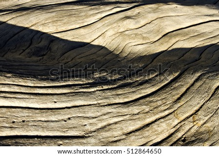 Dry tree trunk. Nature texture. Natural background. #512864650