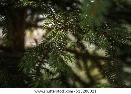 green spruce branch closeup on a light background #513280021