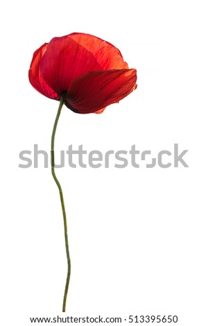 Single red poppy as memory symbol isolated on white background #513395650