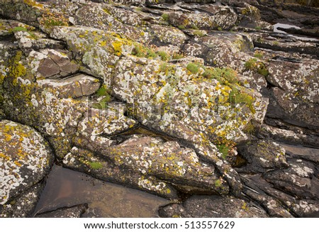 Seaweed and sandstone rock with encrustation, Clachtoll, Scotland #513557629