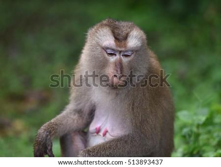 monkey #513893437