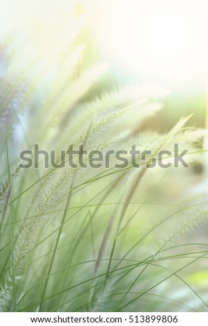 A colorful grass flower and light. #513899806