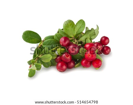 Wild Cowberry foxberry, lingonberry with leaves isolated on white. #514654798