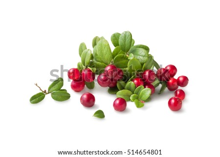 Wild Cowberry foxberry, lingonberry with leaves isolated on white. #514654801