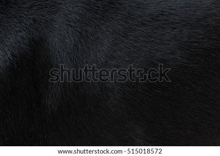 Dog fur texture Royalty-Free Stock Photo #515018572