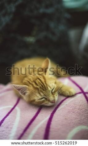 Ginger kitten sleeping on a blanket at home #515262019
