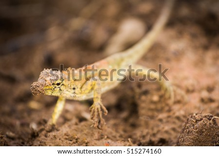chameleon, dig the ground #515274160