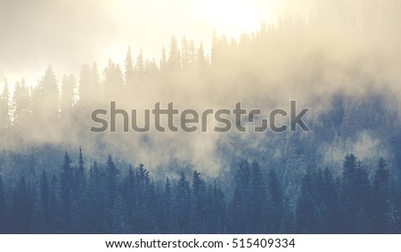 beautiful mountain forests covering with a lot of fog. #515409334