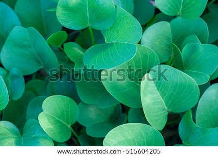 Green oval leaves at sunny day background. Top side view. #515604205