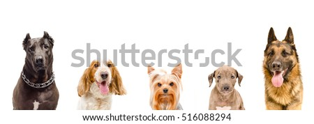 Portrait of dogs, closeup, isolated on white background #516088294