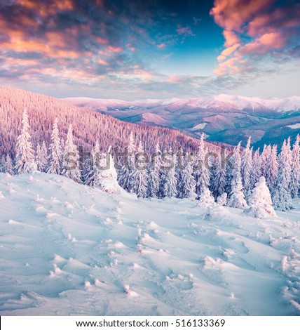 Winter wonderland in Carpathian mountains. Colorful morning landscape in the highland, Happy New Year celebration concept. Artistic style post processed photo.