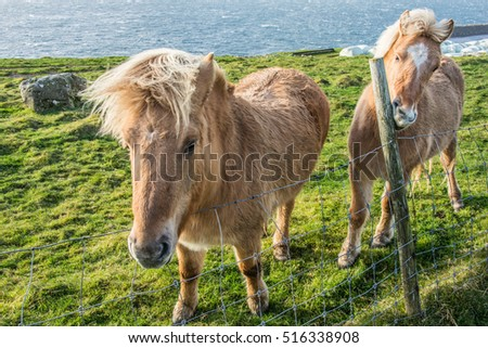 Two horses in the countryside #516338908