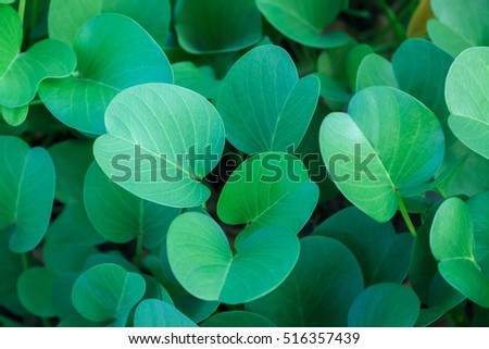 Green oval leaves at cloudy day background. Top side view. #516357439