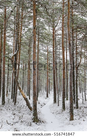 Winter forest #516741847