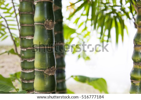 Green bamboo background #516777184