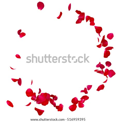 Red rose petals scattered on the floor in a semi-circle. There is a place for Your text or photo Royalty-Free Stock Photo #516959395