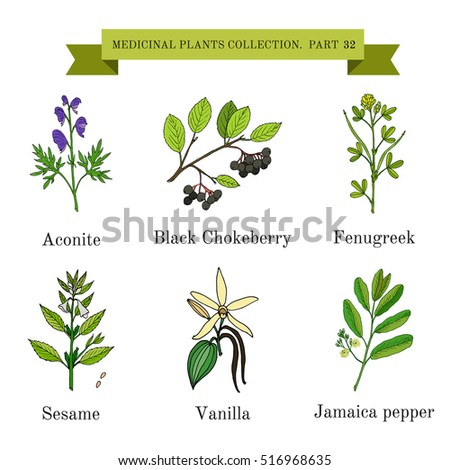 Vintage collection of hand drawn medical herbs and plants, aconite, black chokeberry, fenugreek, sesame, vanilla, jamaica pepper. Botanical vector illustration #516968635